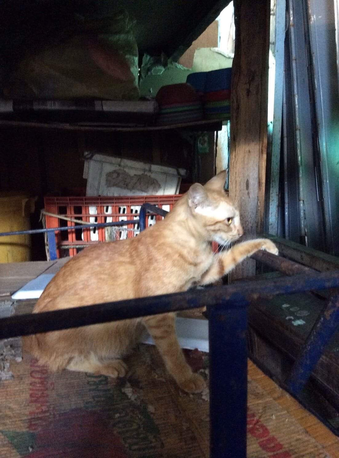 Lucky Cat of the Market ( แมวกวักนำโชคประจำตลาดสด 🐱🐈😼👋🏻 )