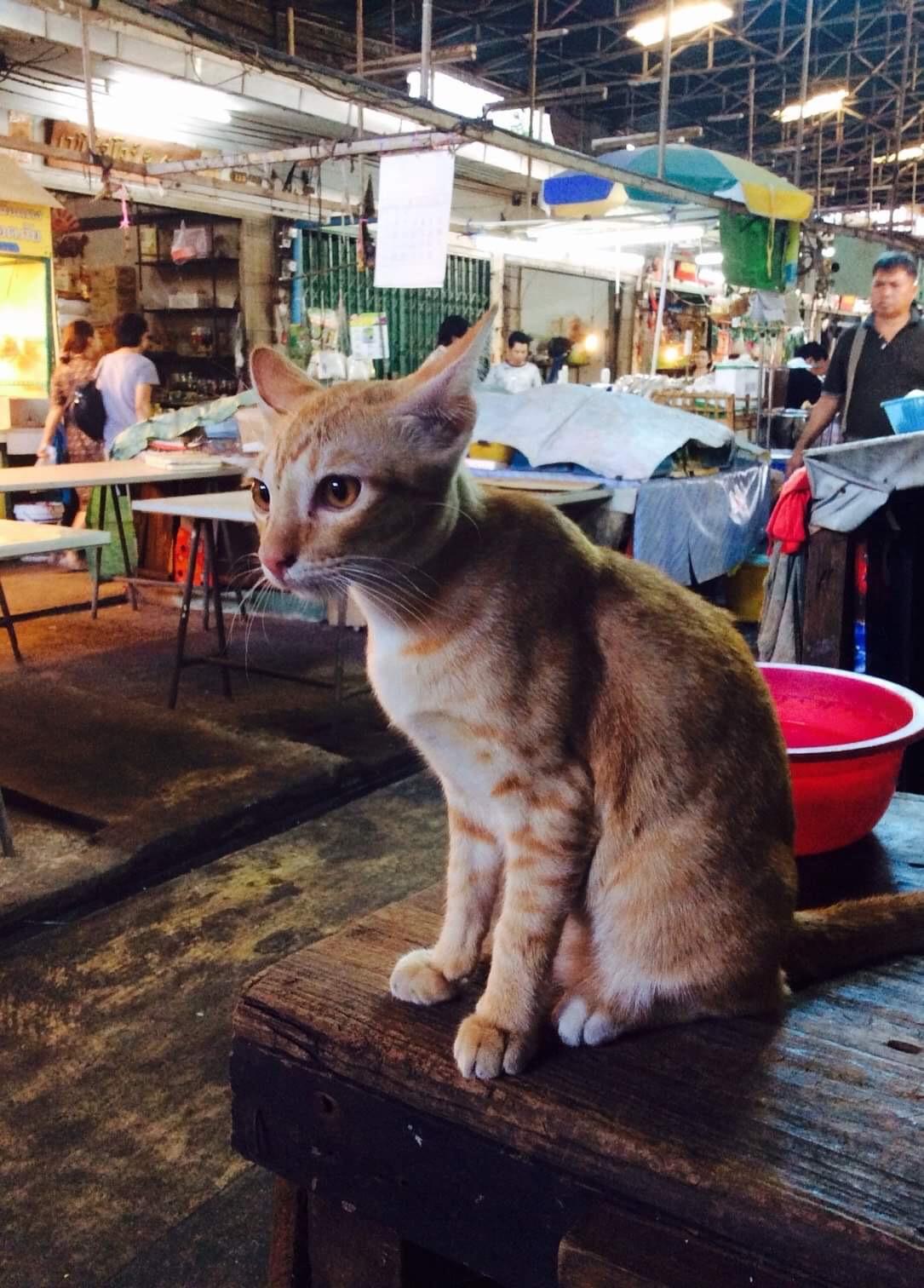 LONELY CAT AT THE WET MARKET 🐱🐈😕 ( เจ้าเหมียวเปลี่ยวเหงา ณ ตลาดสด 🐱🐈😕 )