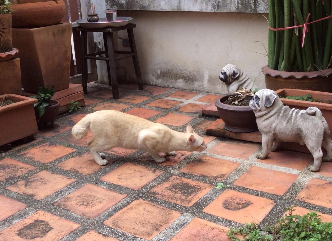 WHEN REAL CAT MEETS FAKE DOG 🐱🐶🐈🐕 ( เมื่อแมวจริงเจอหมาปลอม 🐱🐶🐈🐕 )