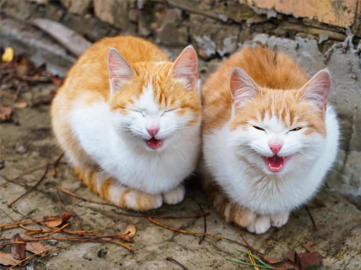 มาเรียนรู้ภาษากายของแมวกัน 🐱🐈😸👐🙌🤝