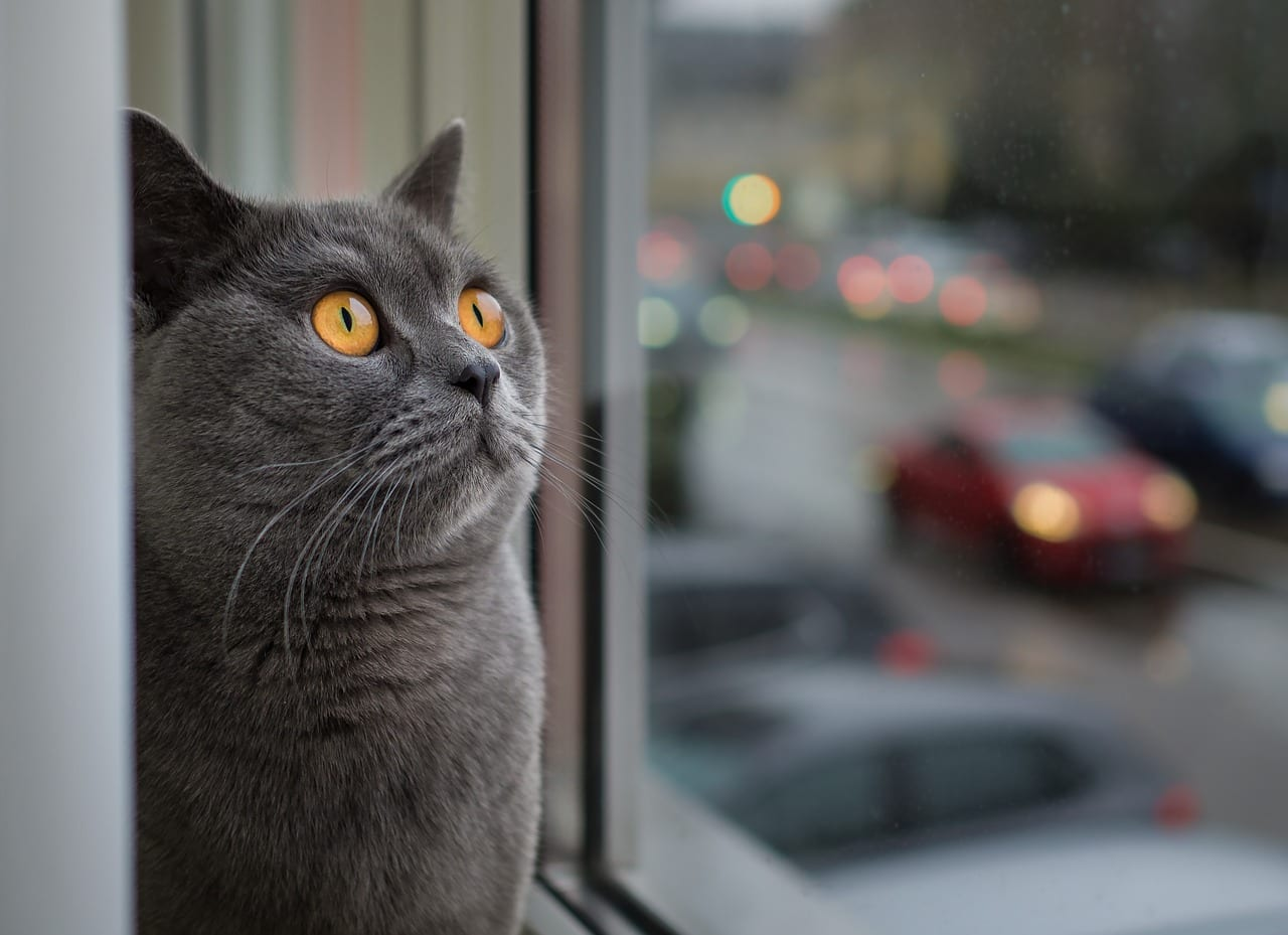 30 ข้อเท็จจริงอันน่าตกตะลึงเกี่ยวกับแมวที่คุณอาจไม่เคยรู้มาก่อน 🐱🐈🙀