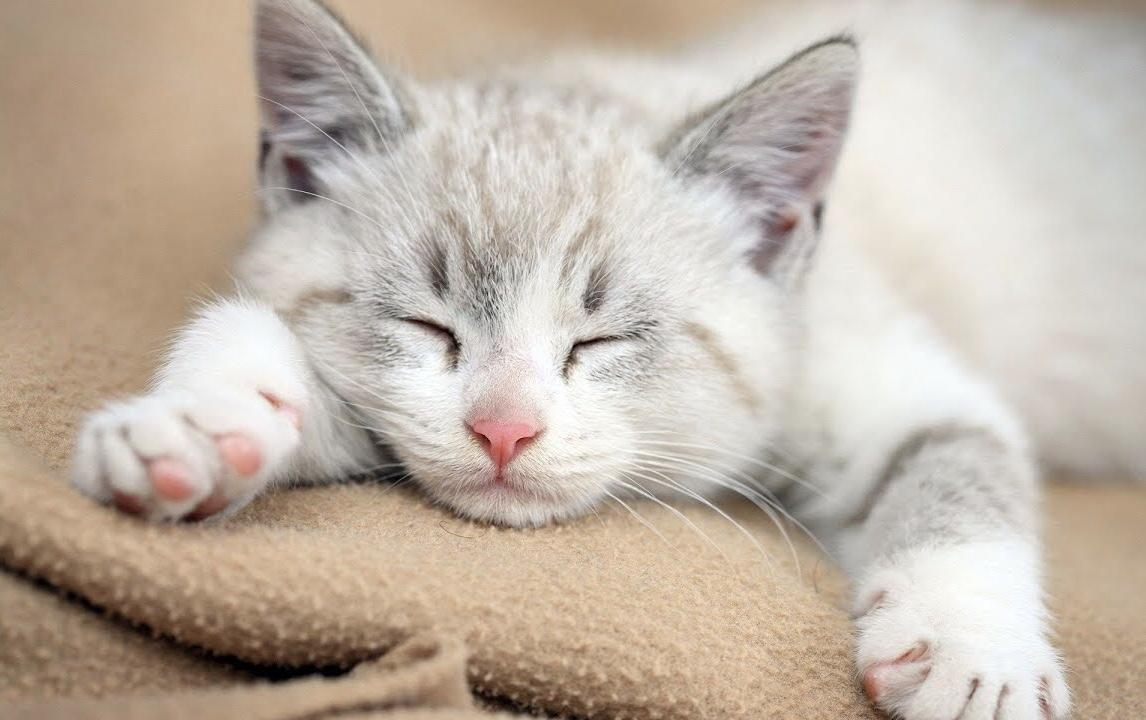 ทำไมแมวถึง นอน เยอะจัง ? มาดูข้อเท็จจริง 5 ข้อเกี่ยวกับแมวนอนกันครับ 🐱🐈😴😪