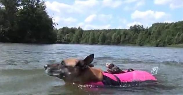"""สุนัขน้ำใจงามอาสามาเป็น """" แท็คซี่น้ำ """" พานกฮูกน้อยข้ามแม่น้ำ 🐶🦉🌊💦🚖🚕"""