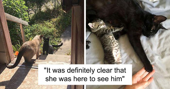 """แมวจรตัวเมียเข้ามา """" พบรัก """" และมาขอ """" คลอด """" ลูกในบ้านของผู้หญิงคนหนึ่ง 🐱🐈👶🏻👩🏻🏡"""