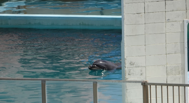 """สลด !!! ปลาโลมา """" เสียชีวิต """" อย่างเดียวดายในพิพิธภัณฑ์สัตว์น้ำ """" ร้าง """" ในญี่ปุ่น 🐬☠️🇯🇵🙁😞"""