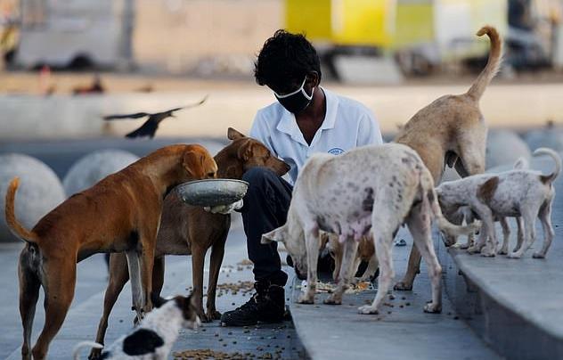 """เหล่าคนรักสัตว์ในอินเดียแห่กันมาช่วย """" ให้อาหาร """" แก่สุนัขเร่ร่อนนับ """" ล้านๆ """" ที่ถูกทิ้งในช่วงล็อคดาวน์ 🐶🐕🤲🏻🧆♥️👳🏾♂️🧕🏾🇮🇳"""