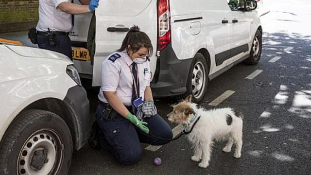 """สัตว์เลี้ยงนับพันกำลังถูก """" ทอดทิ้ง """" ในอังกฤษเนื่องจาก COVID-19 🐶🐱🚫😢🧬🦠🧫"""
