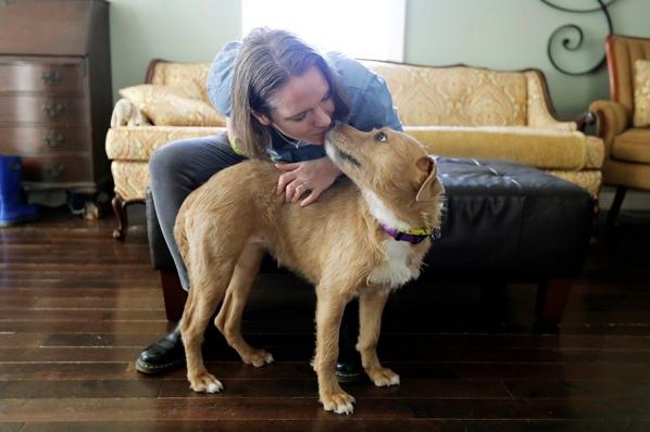 """ในยามกักตัวโควิด-19 นี้ คนอเมริกันหันมา """" อุปการะ """" สัตว์เพื่อการคลายเหงาแถมยังช่วยให้ความรักความอบอุ่นแก่สัตว์ด้วย 🐶🐱🐹🐰🤲🏻🏘❤️"""