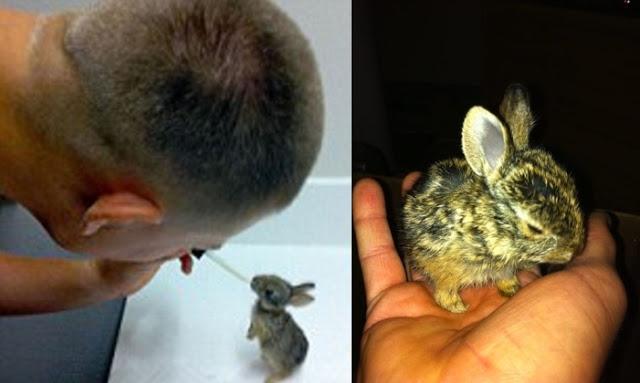 """นาวิกโยธินสหรัฐได้ช่วยดูแลเลี้ยงดูเหล่า """" กระต่ายทารก """" ที่เสียคุณแม่ไปจนเติบโตจนถึงเวลาต้องจากกัน🐰👮🏻♂️🤲🏻👍🏻👌🏻♥️🇺🇸"""