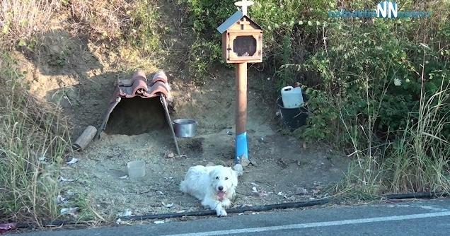"""สุนัขผู้ซื่อสัตย์ผู้ไม่ยอมแยกจากจุดที่เจ้าของ """" เสียชีวิต """" เป็นปีๆ 🐶🐕👨🏻⚰️🤲🏻🙁🇬🇷"""