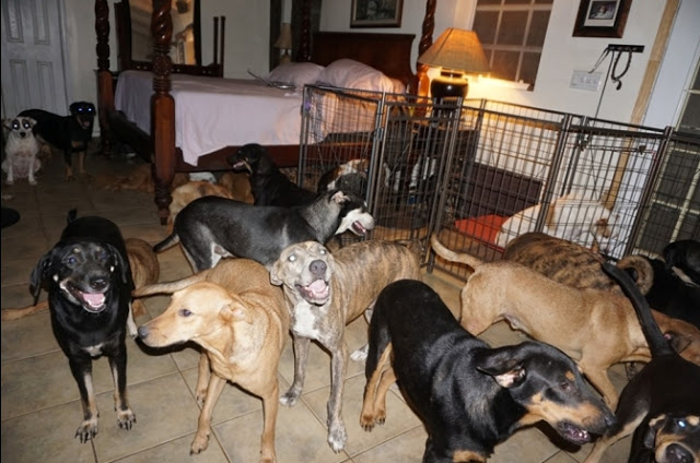 """ผู้หญิงใจเมตตา """" เปิดบ้าน """" ให้สุนัขกว่า 97 ตัวเข้ามา """" หลบภัย """" พายุเฮอริเคน 👩🏻🐶🤲🏻🏡🌪👌🏻♥️🇧🇸"""