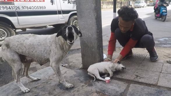 """คุณแม่สุนัข """" ร้องไห้ """"  ขอผู้คนให้ช่วยเหลือลูกสุนัขที่บาดเจ็บของเธอด้วย 🐶🐕👩🏻🗣😢😭👶🏻🤕😫🩸🤲🏻🇮🇳"""