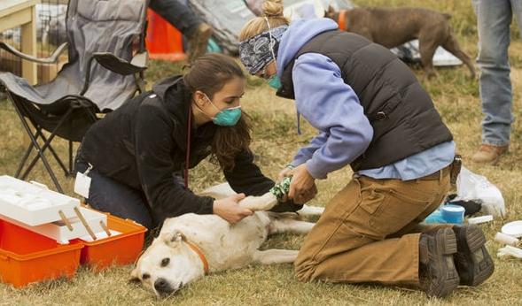 """เจ้าหน้าที่และชาวบ้าน """" รวมพลัง """" กัน ช่วยเหลือสัตว์ที่ถูกทอดทิ้งติดอยู่ในไฟป่าแคลิฟอร์เนีย 🐶🐷🐮🐴🦌🔥🌲🤝🤲🏻♥️🇺🇸"""