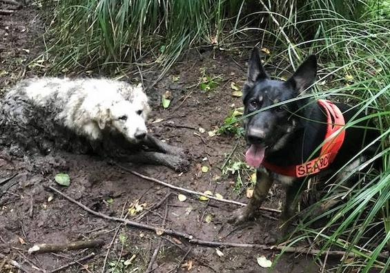 """สุนัขฮีโร่ """" กู้ภัย """" ช่วยชีวิตลูกสุนัขที่ """" ติด """" อยู่ในโคลนเป็นเวลา 2 วัน 🐶🐕🐕🦺🤝🤲🏻👌🏻❤️🇺🇸"""