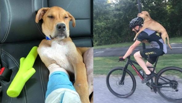 """ชายคนหนึ่ง """" ปั่นจักรยาน """" ช่วยนำสุนัขที่บาดเจ็บ """" ขี่หลังซ้อนท้าย """" พาส่งไปรักษาถึงเมือง 🐶🤕👨🏻🚴🏻🤲🏻♥️🛣🏘🇺🇸"""