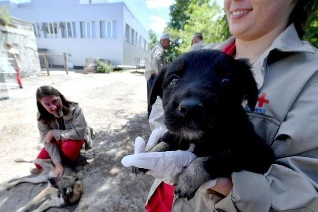 """สุนัขกำพร้าที่รอดชีวิตจาก """" กัมมันภาพรังสี """" รั่วได้ """" รับเลี้ยง """" และ เริ่ม """" ชีวิตใหม่ """" ที่สหรัฐอเมริกา 🐶🐕☢️☠️🤲🏻👌🏻♥️🇺🇸"""