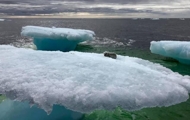 """ชาวประมงช่วยชีวิตสุนัข """" จิ้งจอกขั้วโลก """" ที่ติดอยู่บนเกาะภูเขาน้ำแข็งลอยในทะเล 👨🏻⛴⚓️🤝🤲🏻🦊❄️🌊♥️"""