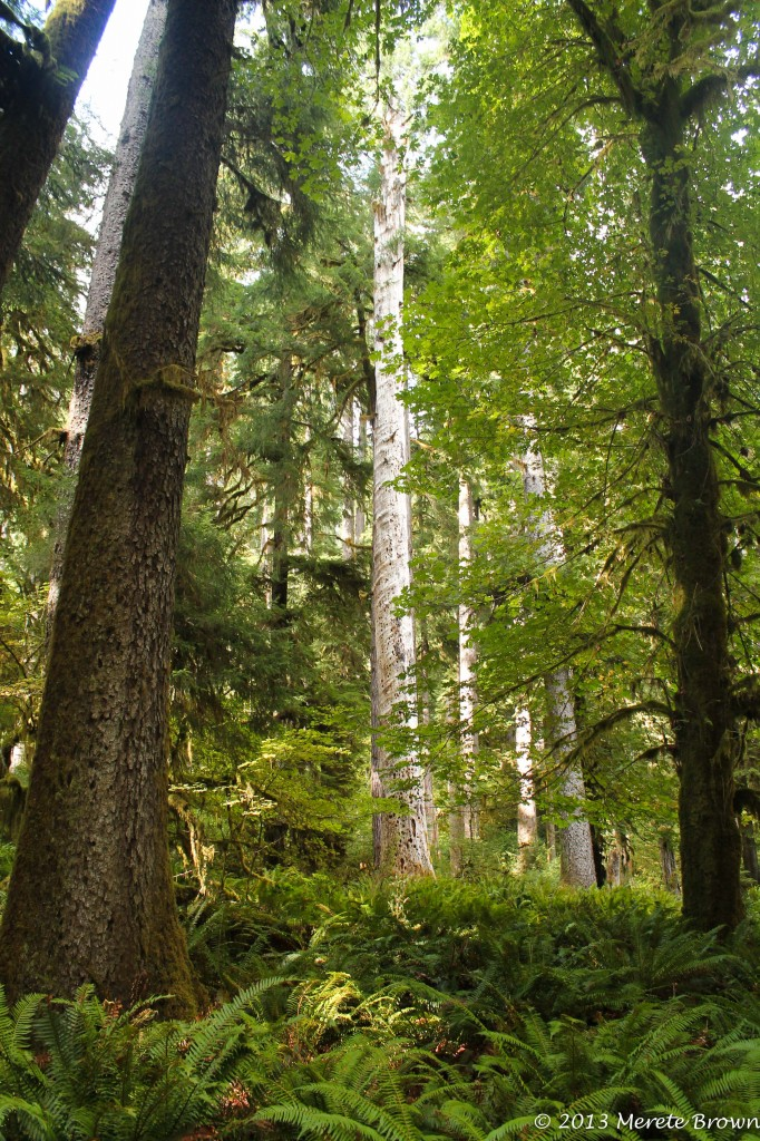 Hoh Rainforest