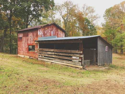 rustic red horse barn