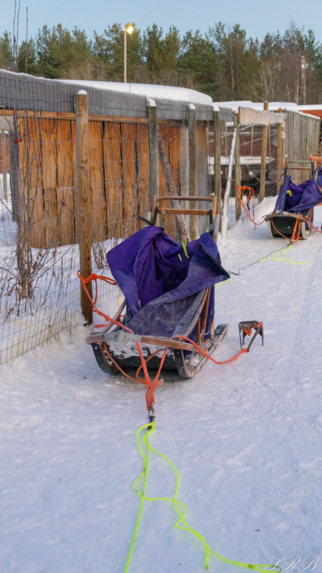 Trasti & Trine, dog sledding in Norway Outside This Small Town basket sled