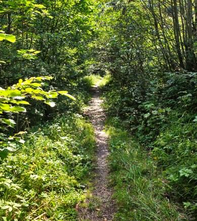 6_trail_490