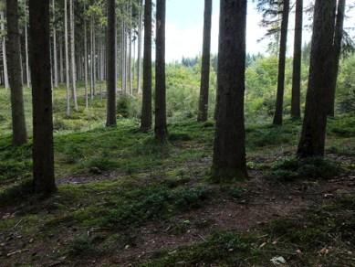 9_woods_490