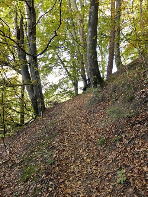 trail_sb1_490