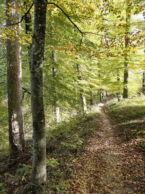 trail_sb2_490