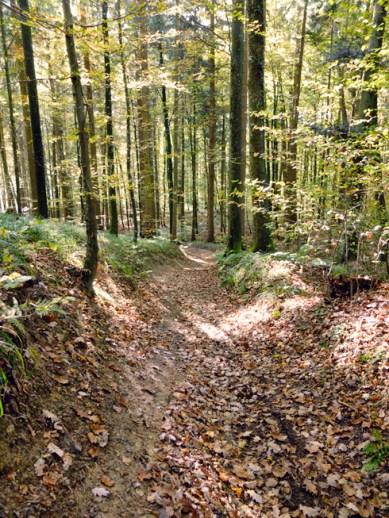 trail_sb3_490