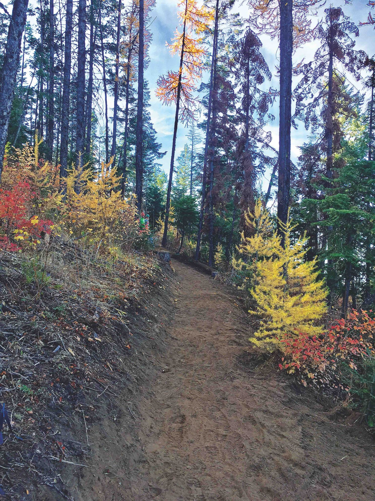 Forested trail at Mica Peak Conservation Area, with yellow larch trees and red and orange hues on leaves.