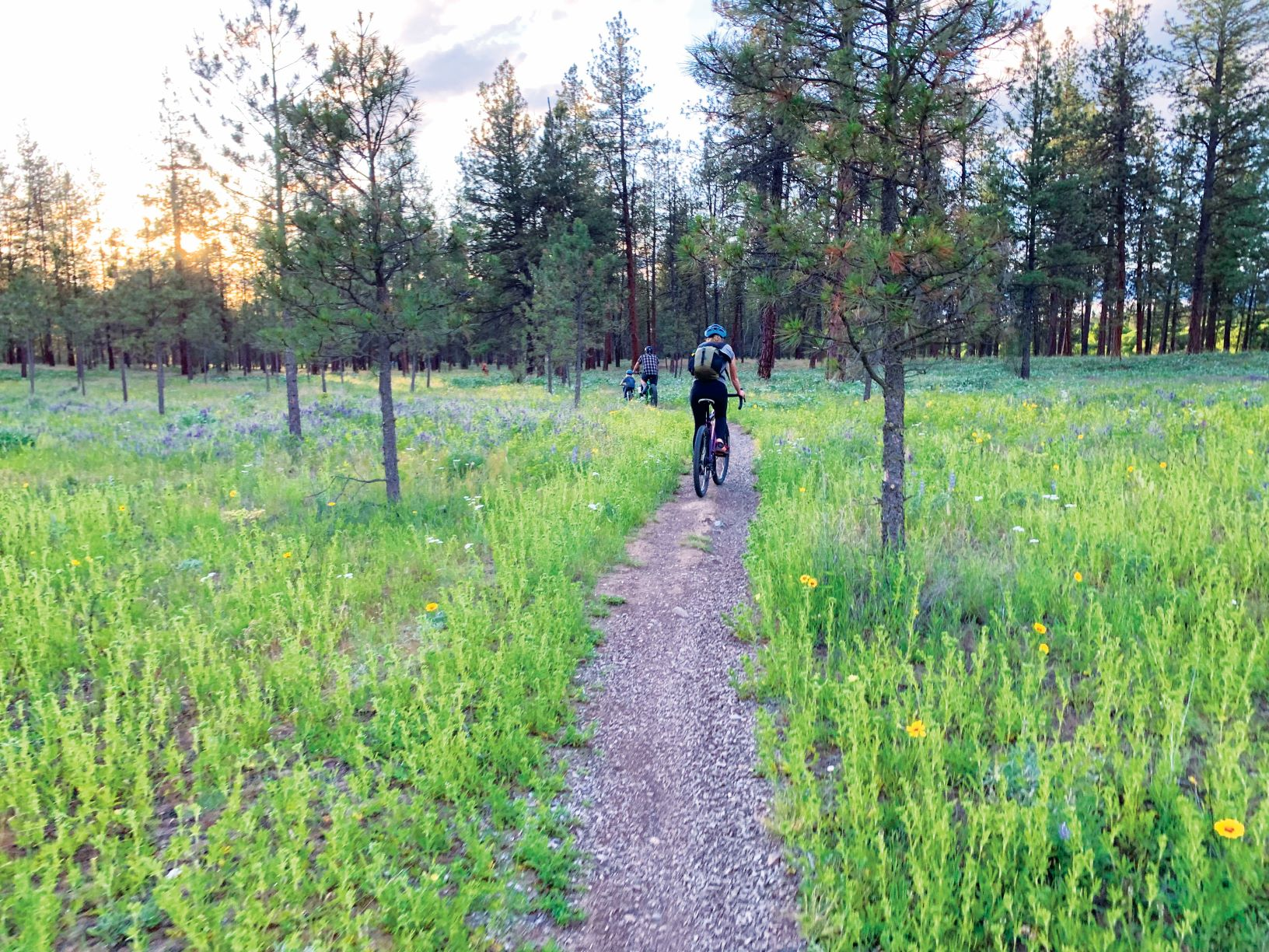 Riverside State Park - dirt trail through grassy meadow, heading towards treed area.