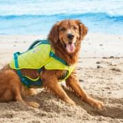 standley dog life jacket for boating safely
