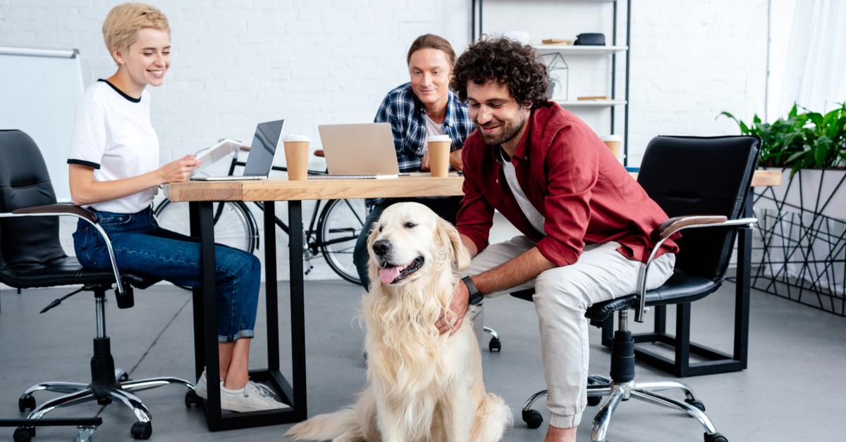 bring dog to work
