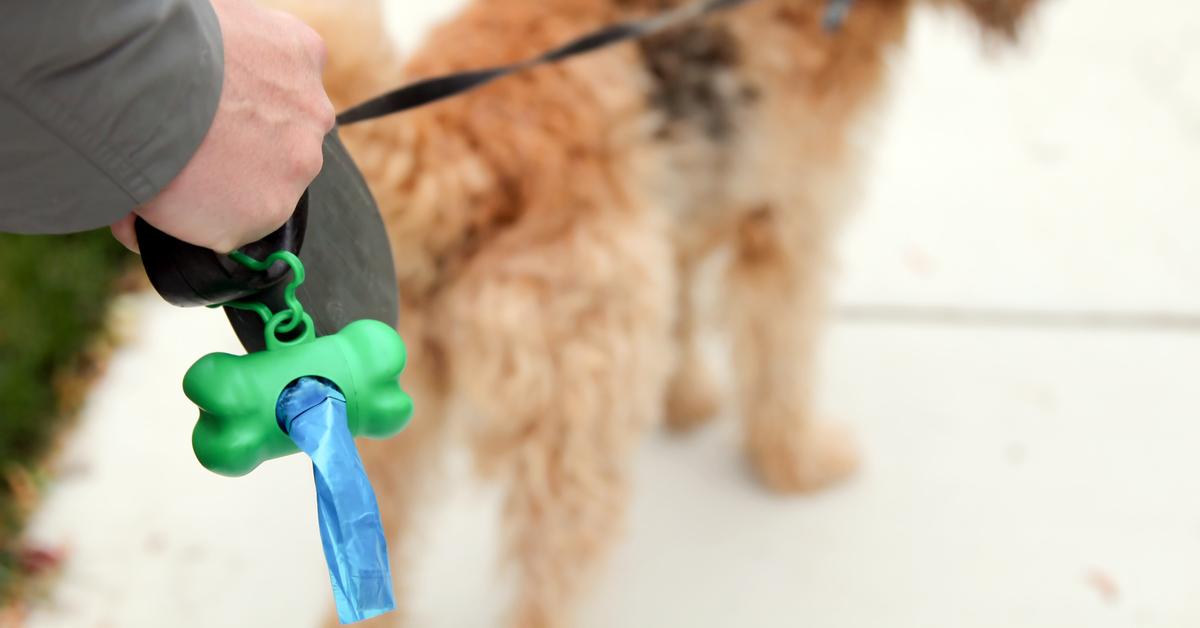 dog poop laws
