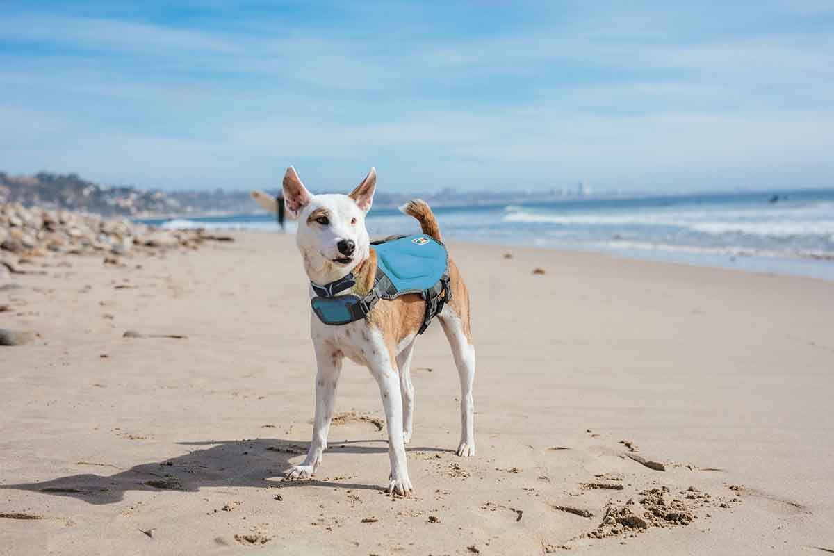 dawson dog life jacket