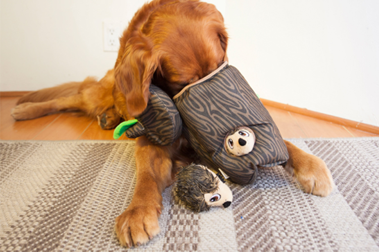 hide-a-hedgie dog enrichment toy