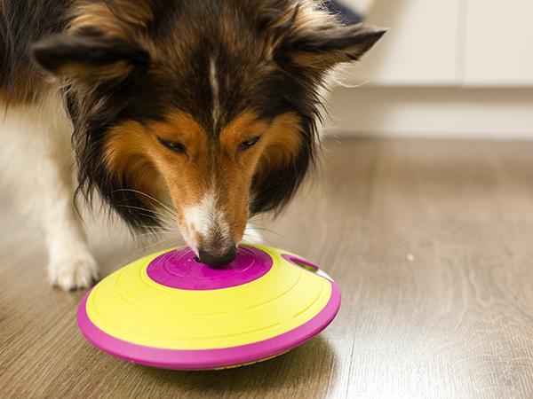 puppy enrichment toys nina ottosson dog maze interactive dog toys