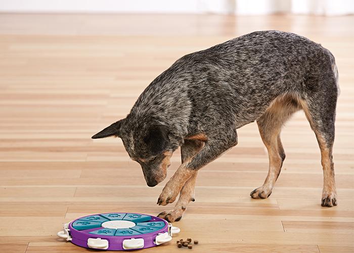 nina ottosson dog games dog puzzles
