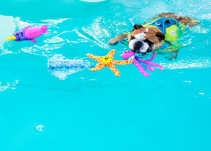 floaty dog toy, water toy, dog toy, dog water toy