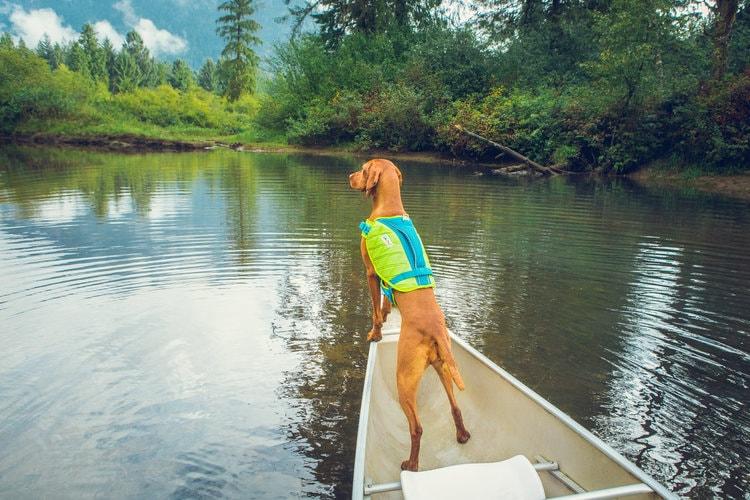 Dog wearing a life jacket boating on a lake
