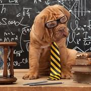 Smart Dog IQ Test