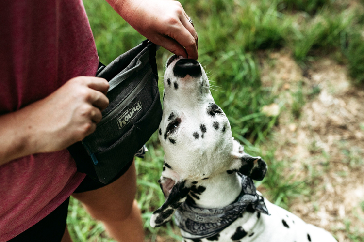 person training their dog