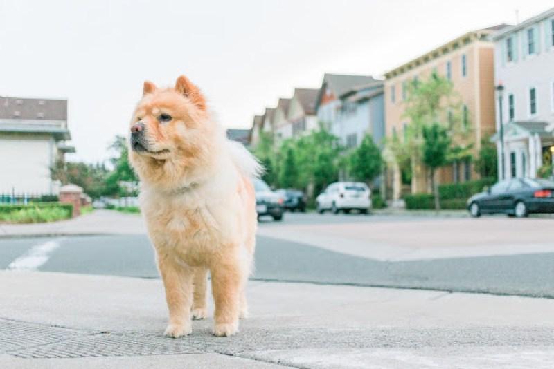 fluffy dog on street