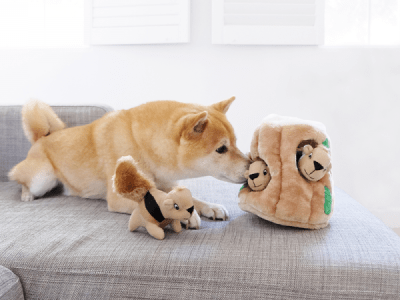 small dog playing with interactive dog toy