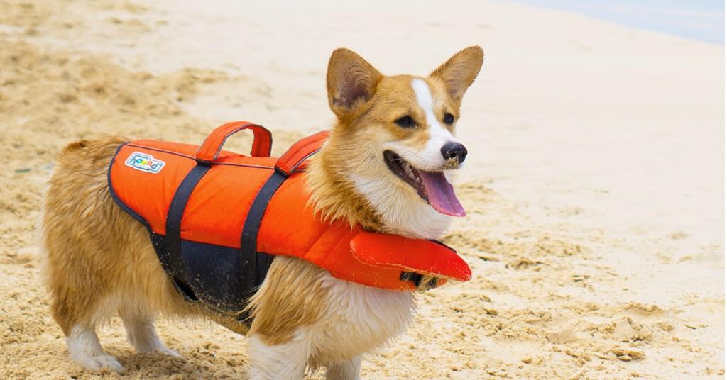 dog-life-jacket-summer-activity-with-your-dog