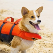 granby dog life jacket