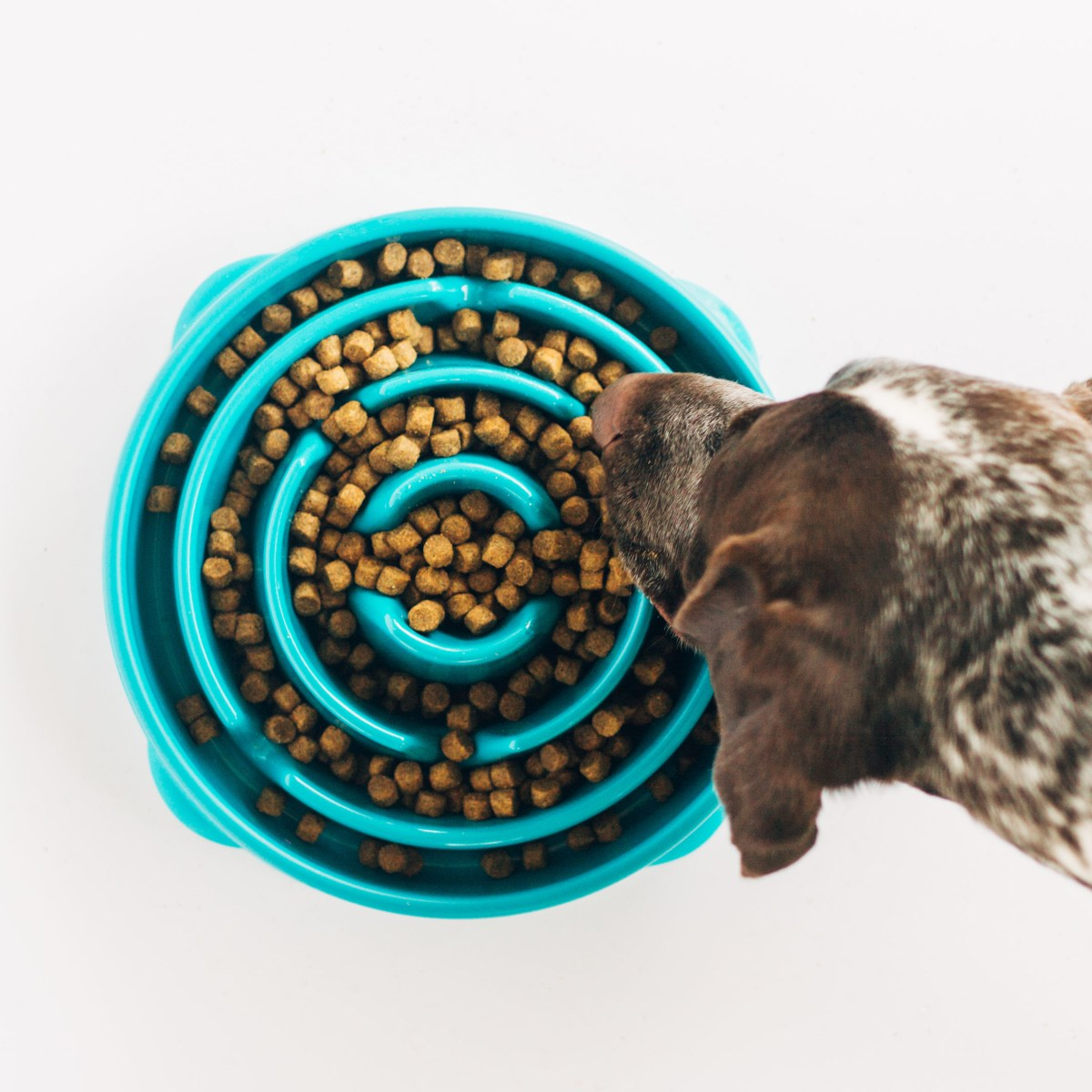 Fun Feeders are great to bring with you on a road trip with a dog