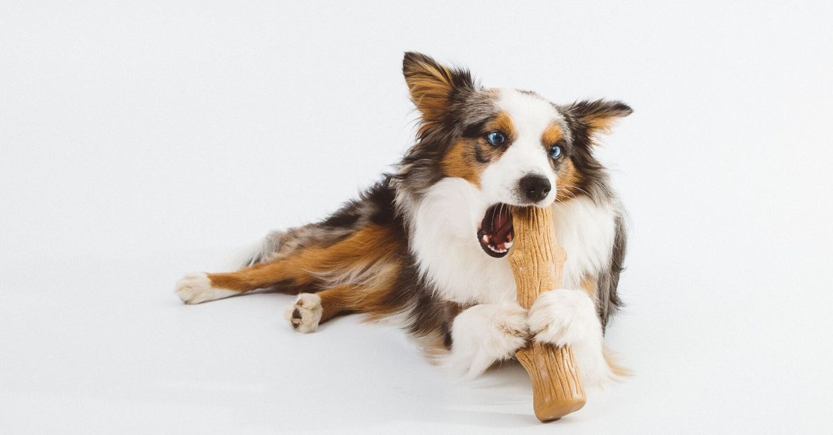 dog toys for strong chewers