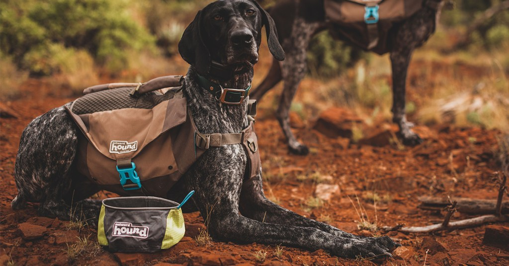 Port-A-Bowl portable dog bowl next to dog wearing dog backpack