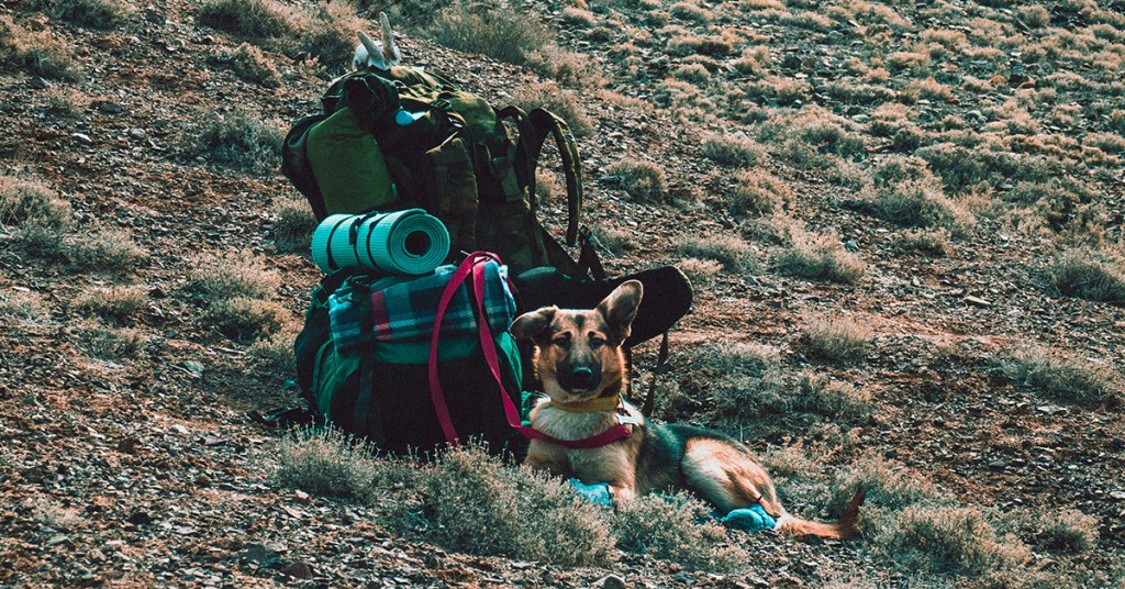Camping, like 'normal'. Summer activities with your dog
